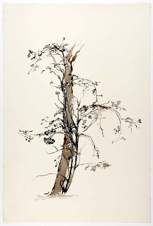 ROSIER SUR LE POMMIER - encre au pinceau56,5x38cm
