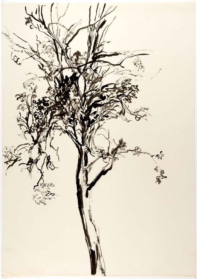ARBRE - encre au pinceau - 64x45cm