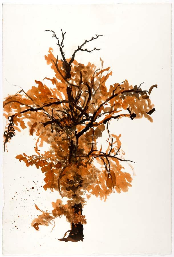ARBRE - encre noire et sépia au pinceau -57x38cm