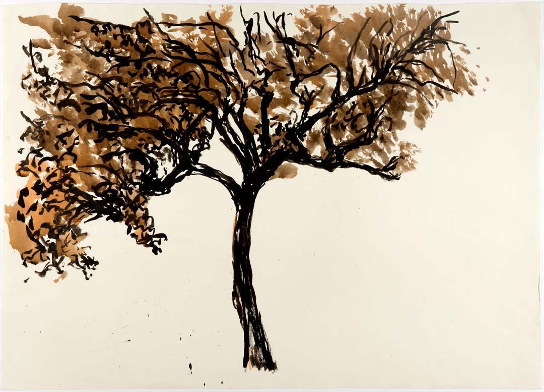 POIRIER - encre noire et sépia au pinceau - 70x50cm